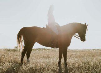 9 Des Mukisi Berkuda, Sunnah Rasul Beragam Manfaat Kesehatan